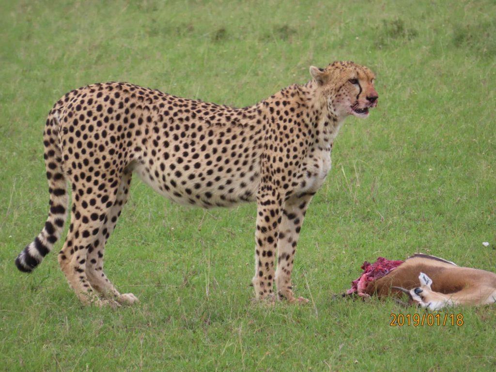ご馳走様でした。(まだ途中かも・・・)自然に生きる動物の美しさ力強さに圧倒されました。ぜひまた動物たちの世界にお邪魔したいです。