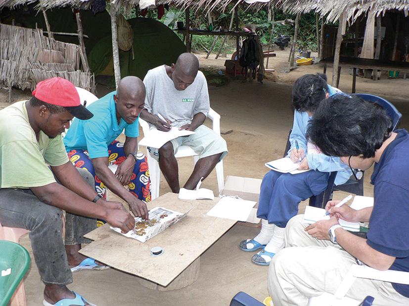 ゴリラの糞を分析するスタッフ