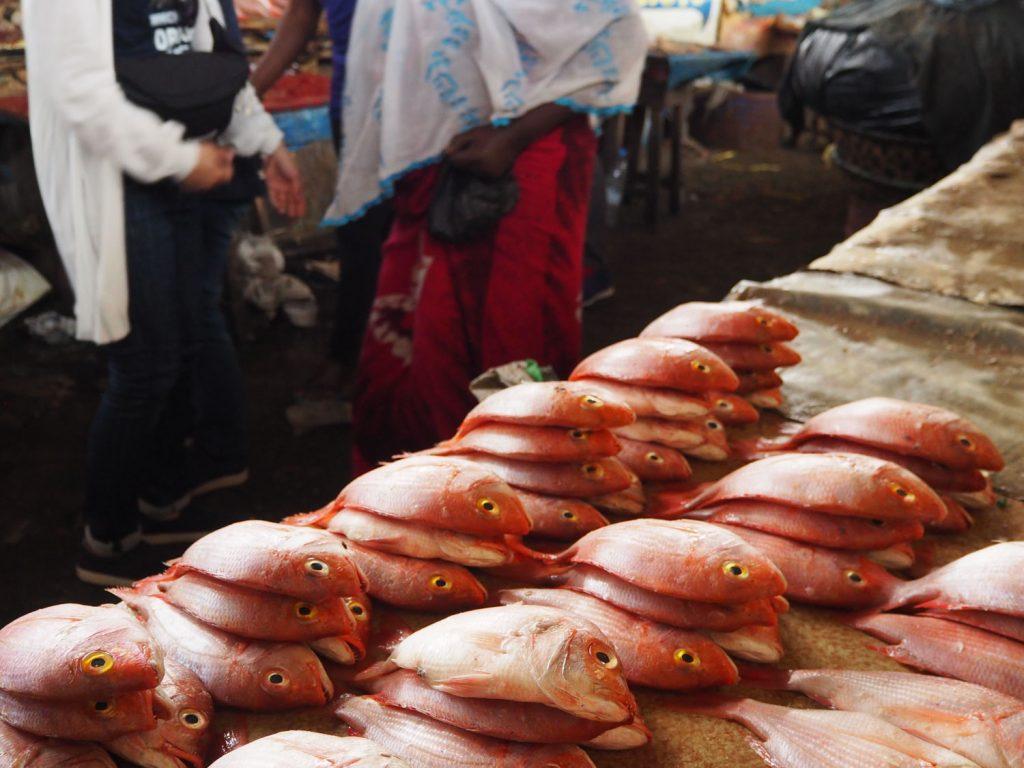水揚げされたばかりの新鮮な魚たち。