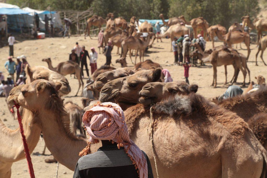 ラクダを始めとする家畜の売買が行われています