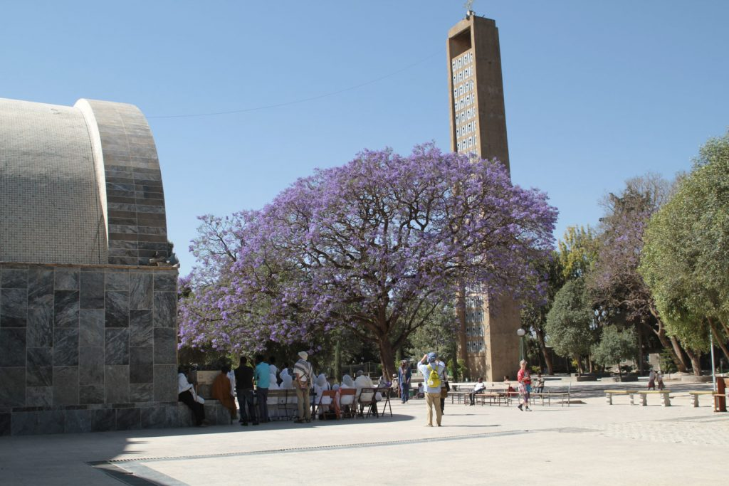 新聖マリア教会の前に立つりっぱなジャカランダの木