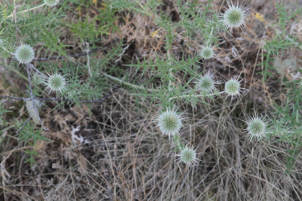 高山植物も多く見られます