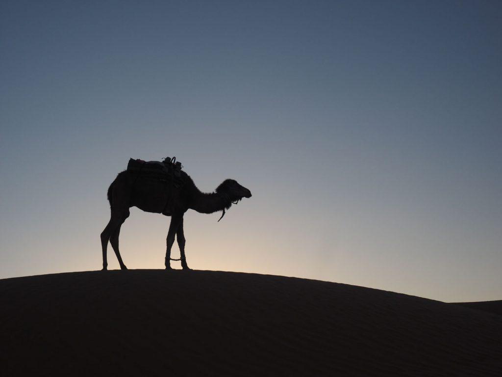 砂漠でこれほど絵になる動物は他にはいません