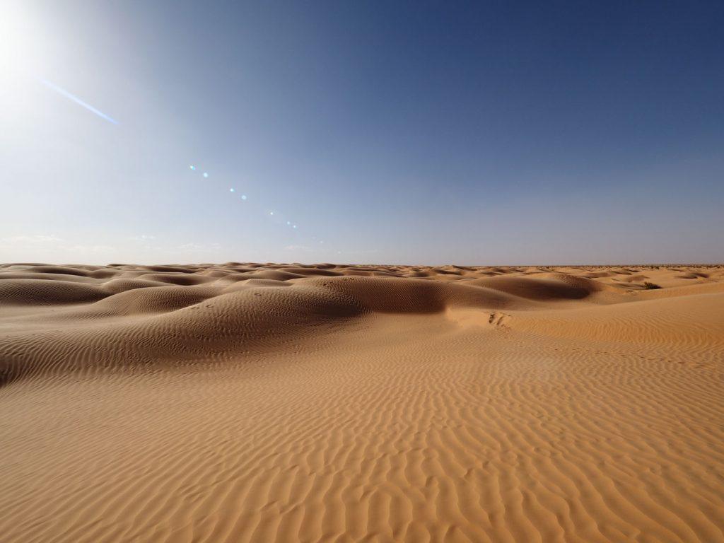 草のまばらに生えたエリアの他、もちろん砂丘地帯もあります