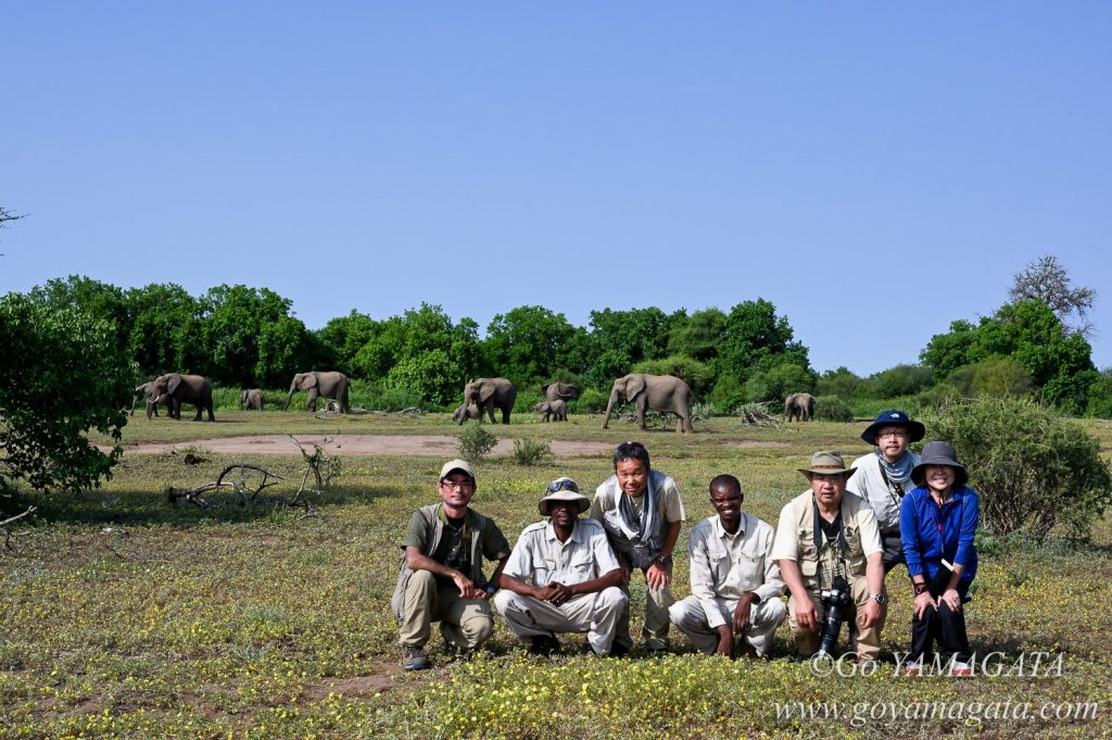ゾウの群れの前での記念撮影