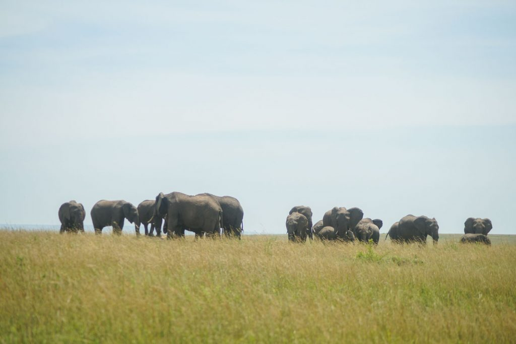 ゾウの大群