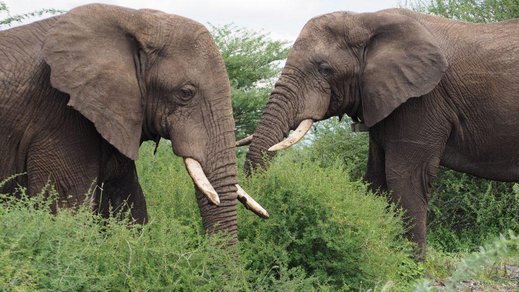 「この辺りにはゾウが現れることがある」とドライバーが説明をしたすぐ後に、現れたゾウの兄弟。ゾウたちもこれから朝の教会へ向かうのかなと話していました。