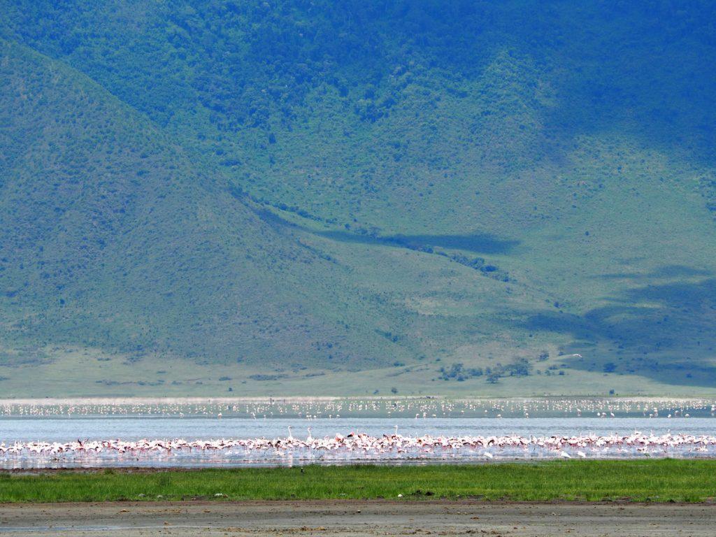 マガディ塩湖にはフラミンゴの群れ。