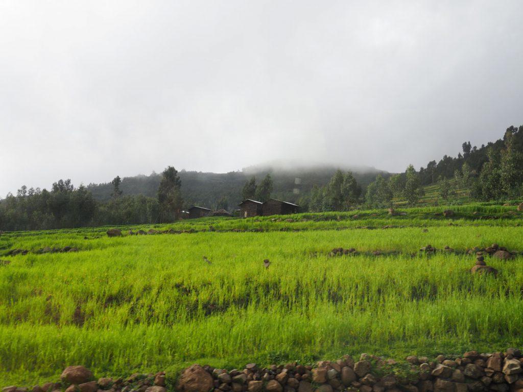 雨季前で、降雨があった場所では緑が美しい土地が広がります
