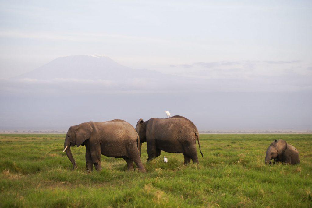 アンボセリの象徴、キリマンジャロと象!