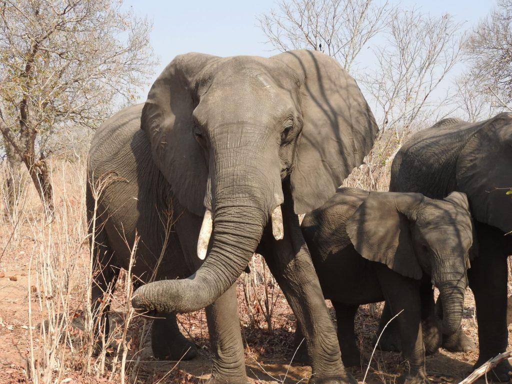 子連れのゾウは約3mという近さでドキドキします。