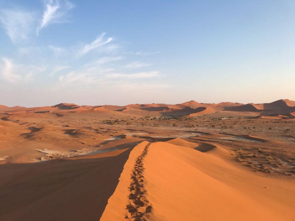 ビッグダディから見下ろしたナミブ砂漠の景色。なめらかな砂丘の線がとても美しいです。