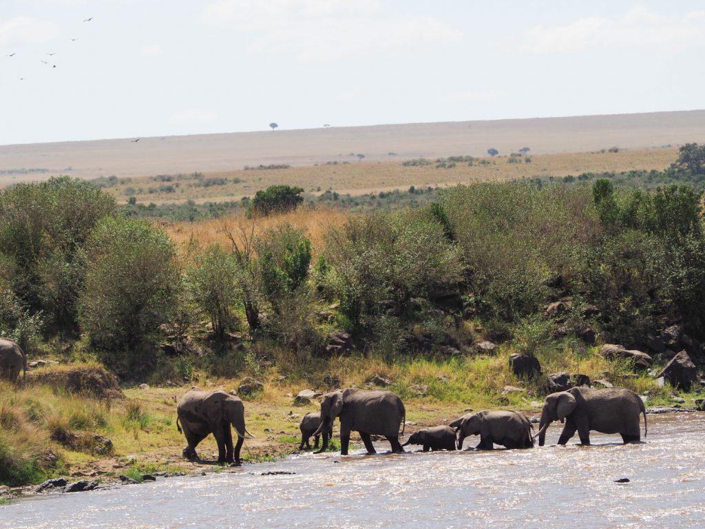 ヌー達の傍らで、水を飲むゾウの親子。
