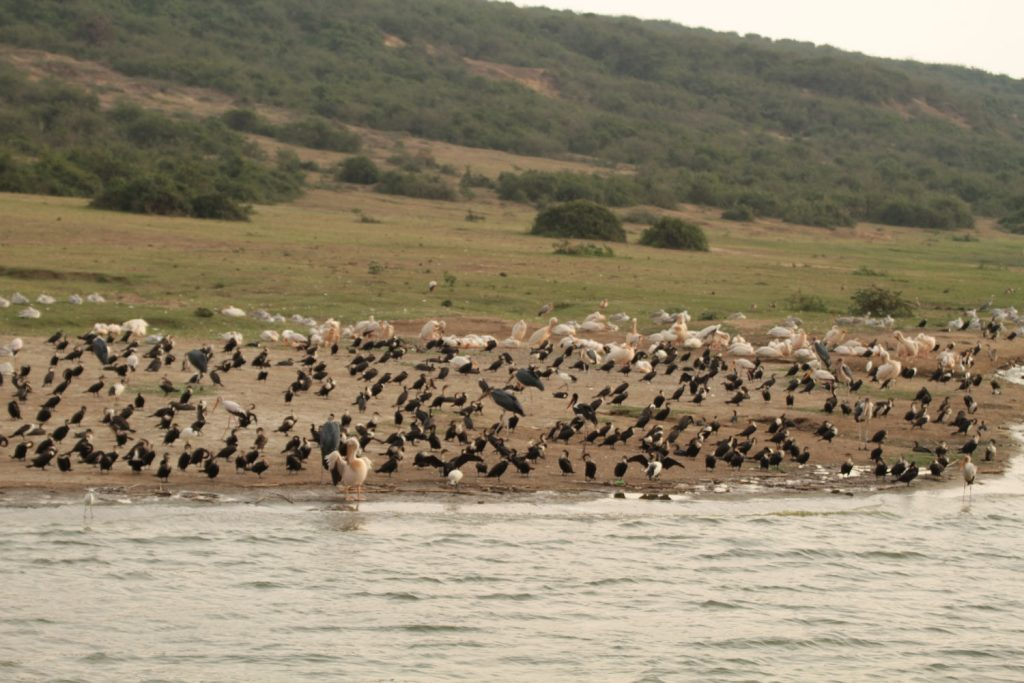おこぼれを狙う鳥の群れ