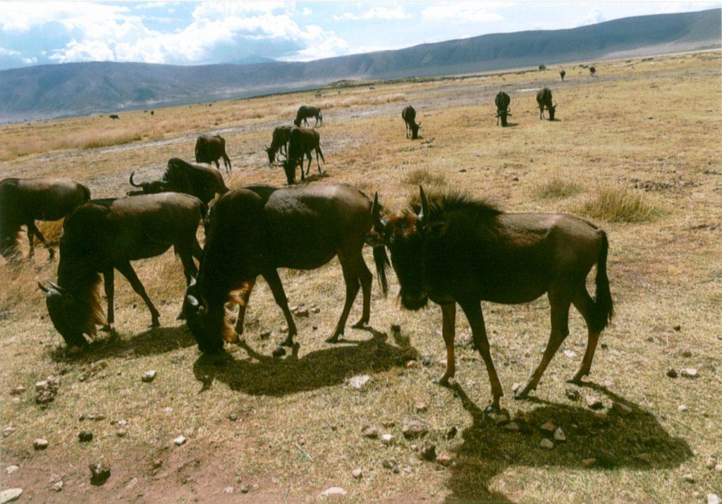 ンゴロンゴロにて。外輪山を越えて入って来るんですね。