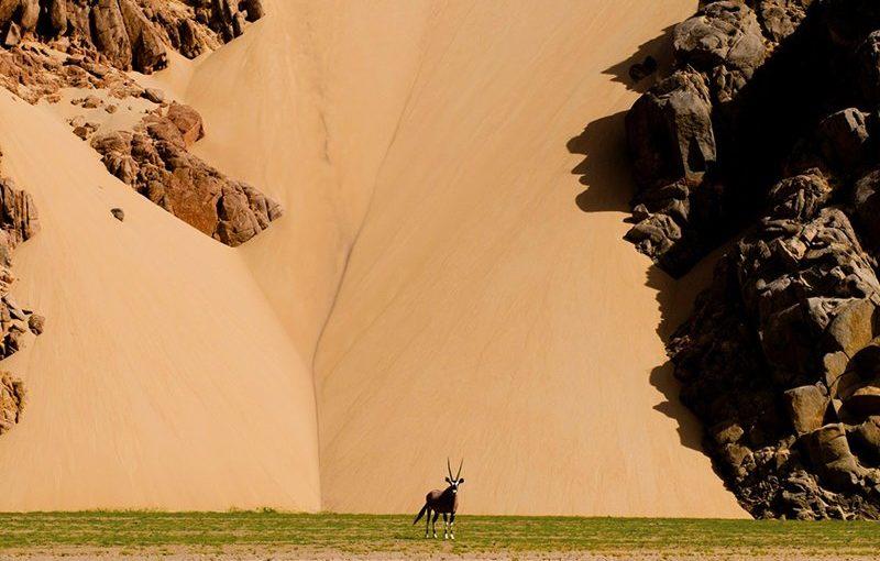 ナミビアに生息するレイヨウ類、砂漠のオリックス(ゲムズボックス)