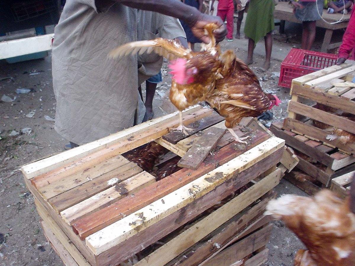 アフリカの街にいる動物