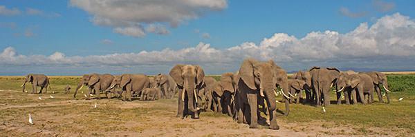 ゾウの群れ。 ゾウのおおらか家族がしばし目の前で過ごしてくれます。