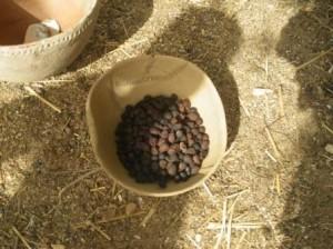 種子の中の胚