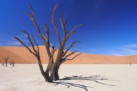 いつも変わらず美しいデッドフライ。立ち枯れたキャメルソーン(アカシアの一種)が、オブジェのように立ち並ぶ、フォトジェニックな風景。