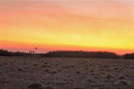 霜が降りた湿原の朝