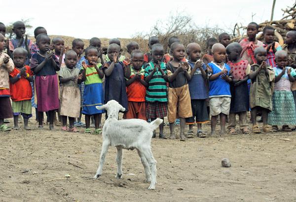 数年前にあった大干ばつで、ほとんど牛が全滅してしまったらしい。牛はマサイの最重要財産です。子供達がさらに貧しくなってきたような雰囲気でした。村の近くにあった自前の学校もなくなっていましたし。子ヤギが見守っています。
