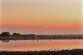 朝の湿原を行くリーチュエ