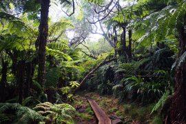 巨大なシダ類を中心とした素晴らしい原生林が広がる、ベローブの森