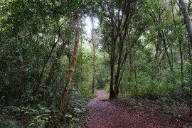 オランウータンの餌付け場まで、森の平坦な道を歩いていきます。