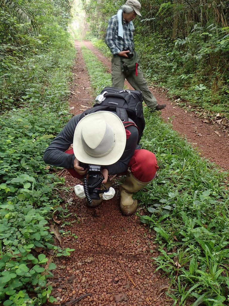 サスライアリを撮影