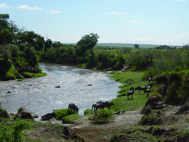 岸に辿り着いたヌーたちはホッ!としている様子。 時に川渡りは命を落とすことだってあります。命がけです。