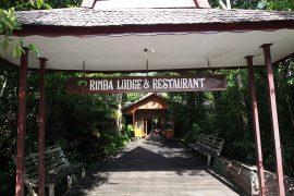 公園の境界沿いにあるほぼ唯一のロッジ、リンバ・オランウータン・エコ・ロッジ。