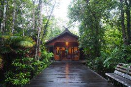 ロッジは豊かな熱帯雨林に包まれています。