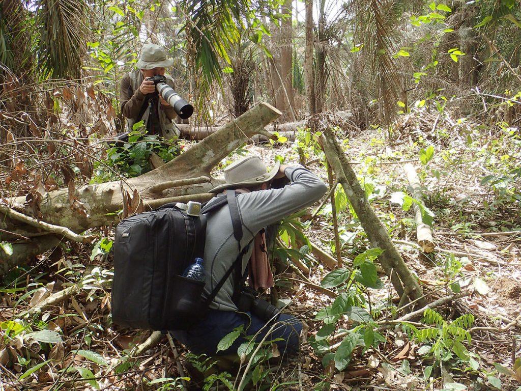 伐採地でカミキリムシを撮影中
