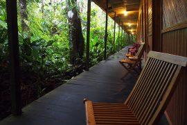 テラスの前は豊かな熱帯雨林です。