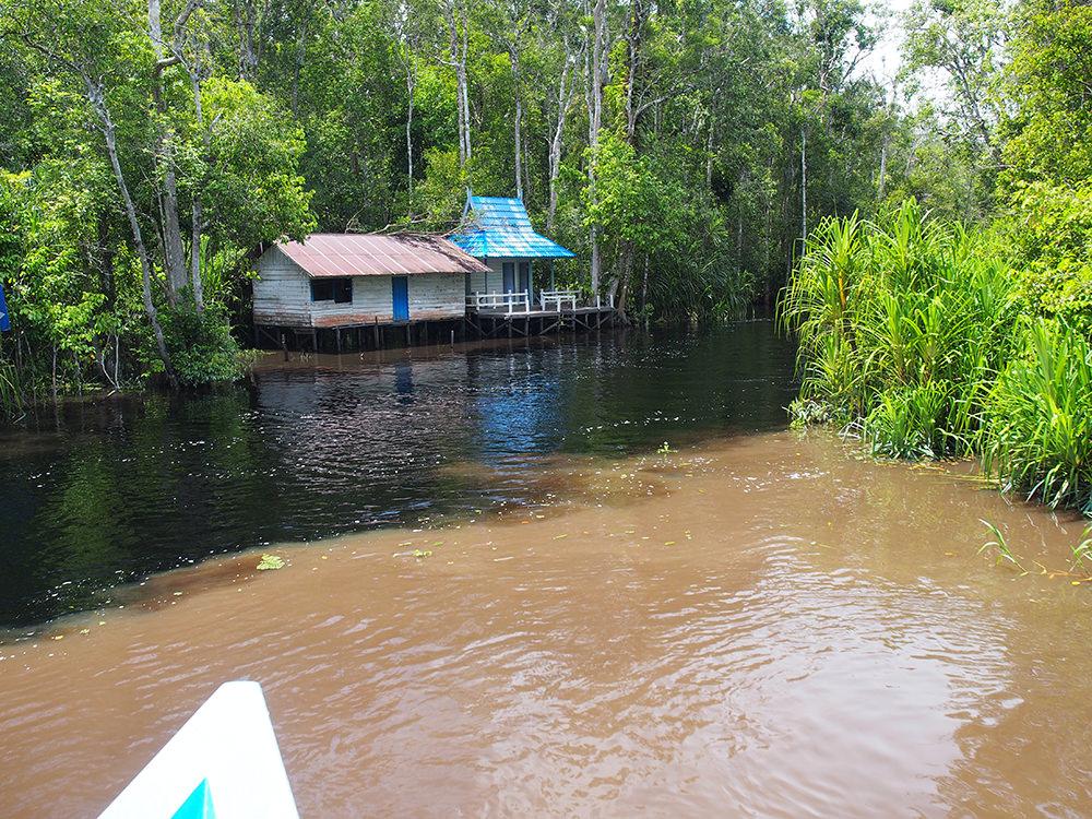 支流に入ると、川の水はタンニンを多く含んだいわゆる「ブラックウォーター」に変わります。