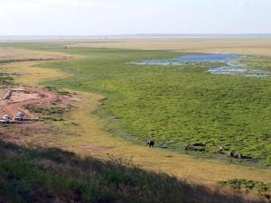 キリマンジャロからの湧き水で水浴び中のゾウ家族