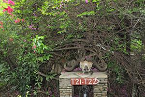 ロッジ敷地内の案内板。シュールでしょ。20年以上前から変わらない風景ですが枝おろししたのだろうか。夜はカバ、ハイエナ、ライオン、バブーンの声が聞こえることもあり結構野生です。