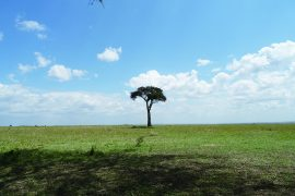 草原は広いです。