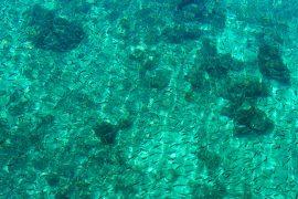 透明度の高い水で、船や桟橋の上から魚が眺められます。