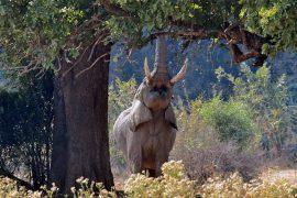 56-Elephant02