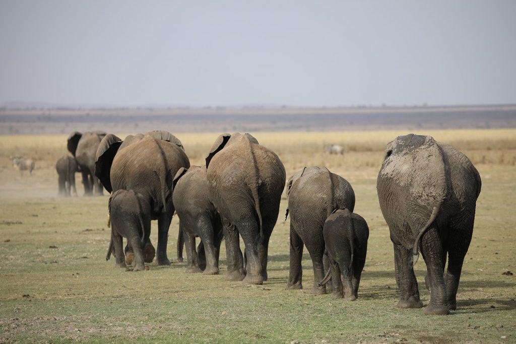 夜はブッシュに帰る象の群れ