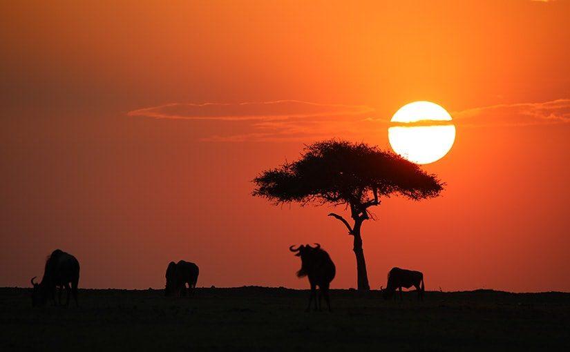 ケニア(Kenya)旅行に行ってきた   アフリカ旅行の道祖神ブログ
