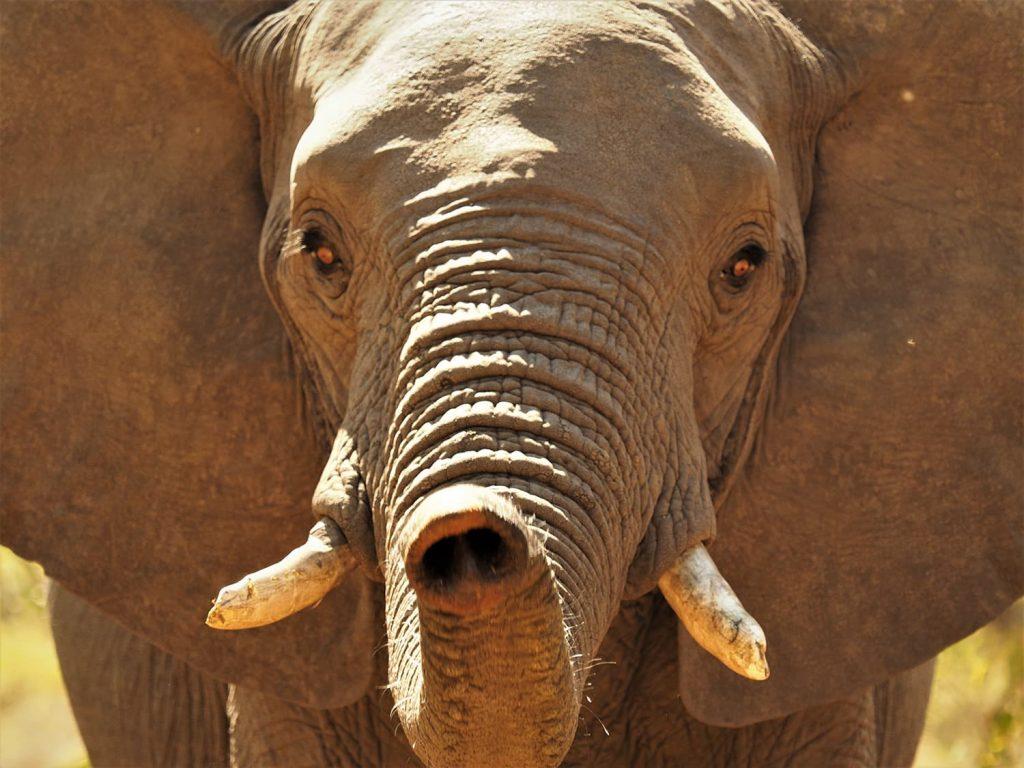 ゾウに近づくのはちょっと緊張します。