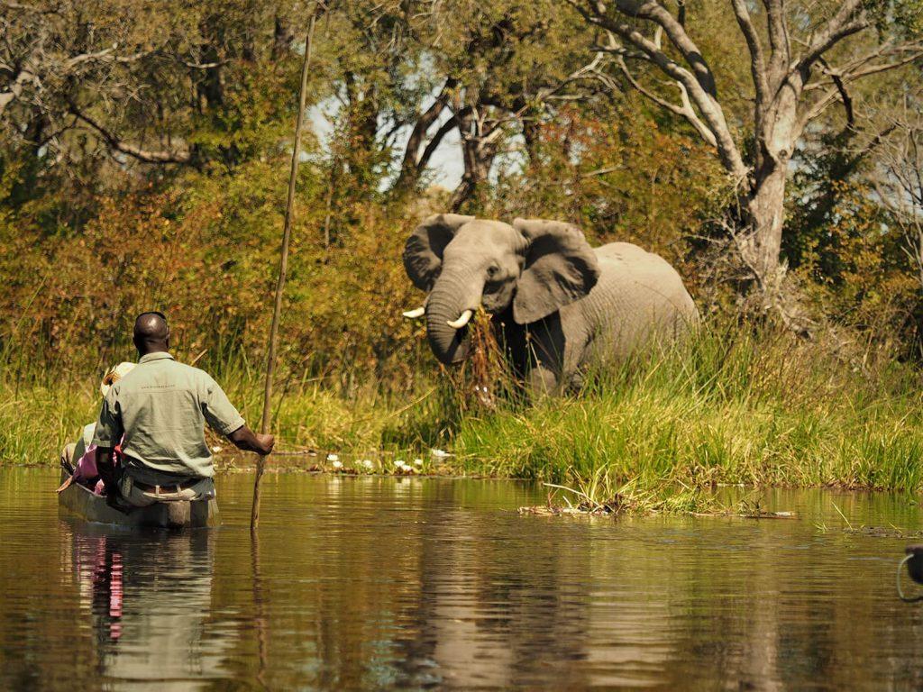 車のサファリと違う距離感。静寂の中、ゾウもこちらが近づくのを少し許してくれました。