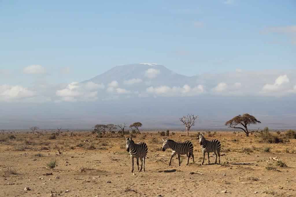 キリマンジャロを望めることでも有名なアンボセリ国立公園。天気もよく、サファリ中にキリマンジャロを望むことができました!