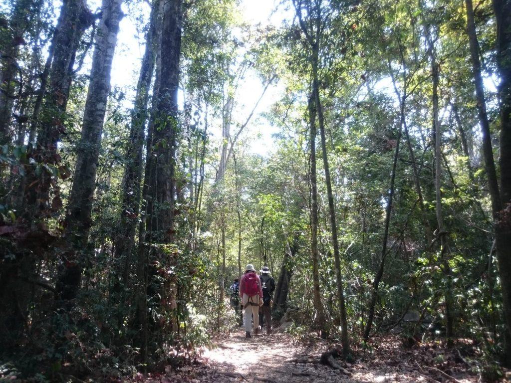 はじめは木陰が気持ち良い森をトレッキング。