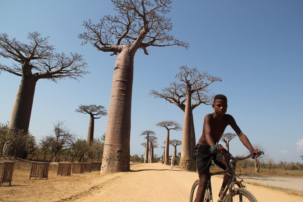 バオバブ並木道と少年