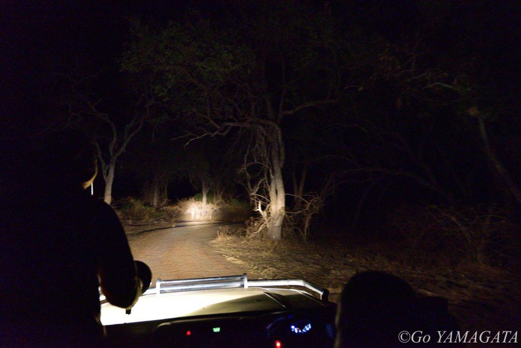 サウス・ルアングワやロウワー・ザンベジは、国立公園でありながらナイトサファリが許されているので、普段はお目にかかれない夜行性動物に会える可能性が高い。