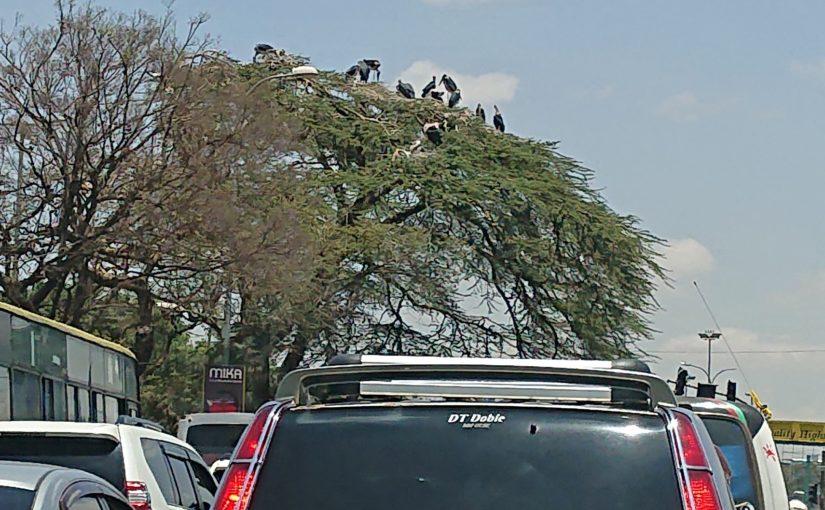 ナイロビのアフリカハゲコウ